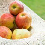 Vše, co potřebujete vědět o jablkách