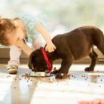 Kočka, pes, dítě…
